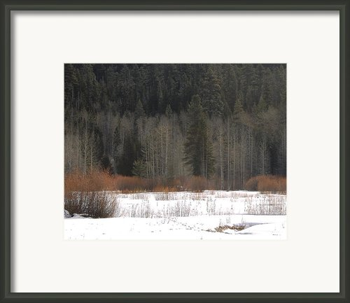 Winters Grip Framed Print By Lydia Warner Miller