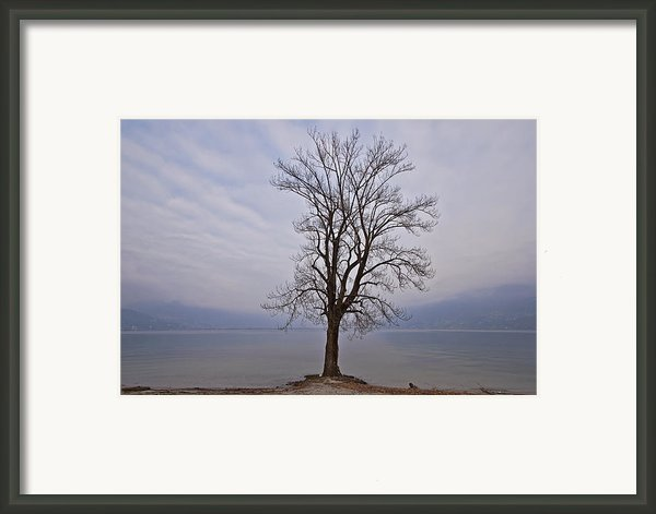 Wintertree Framed Print By Joana Kruse