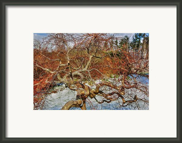 Wirey Framed Print By Dan Stone