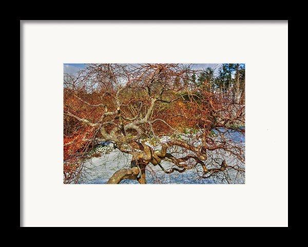 Wirey Framed Print By Dan Stone