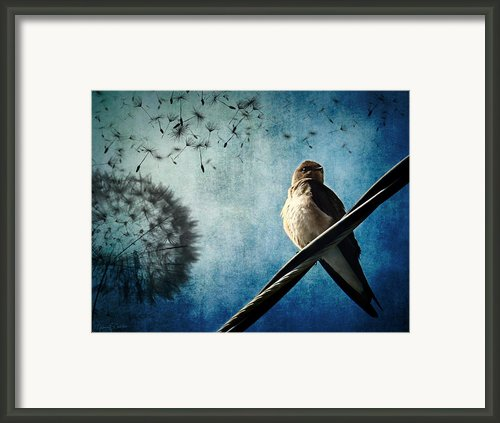 Wishing Swallow Framed Print By Nancy  Coelho