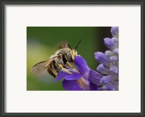 Without Me  Framed Print By Steven Milner