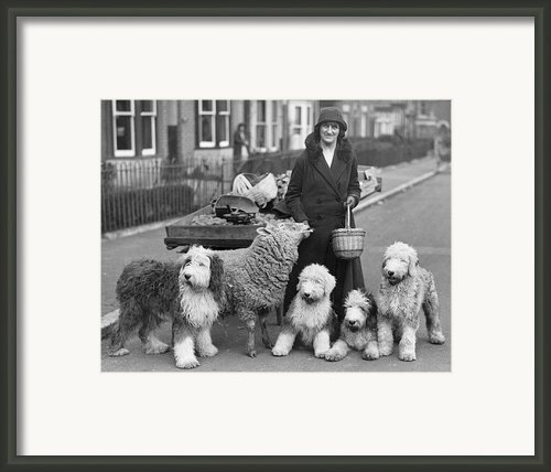 Woman And Pets Framed Print By Fox Photos