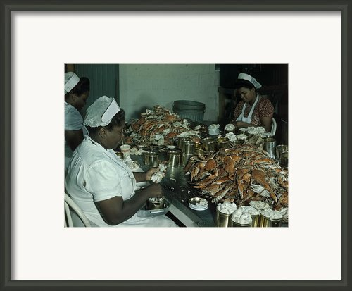 Women Pick And Pack Crab Meat Into Cans Framed Print By Robert Sisson
