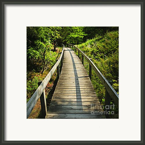 Wooden Walkway Through Forest Framed Print By Elena Elisseeva
