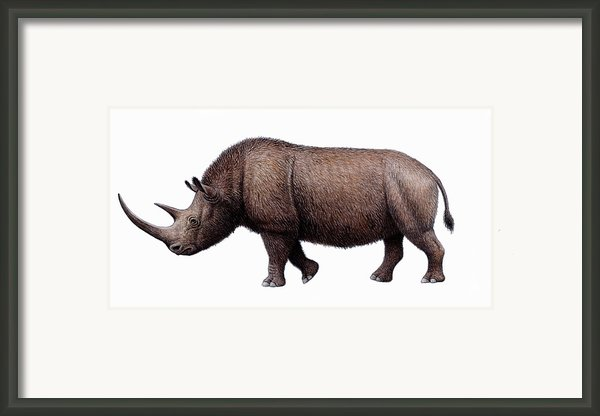 Woolly Rhinoceros, Artwork Framed Print By Mauricio Anton