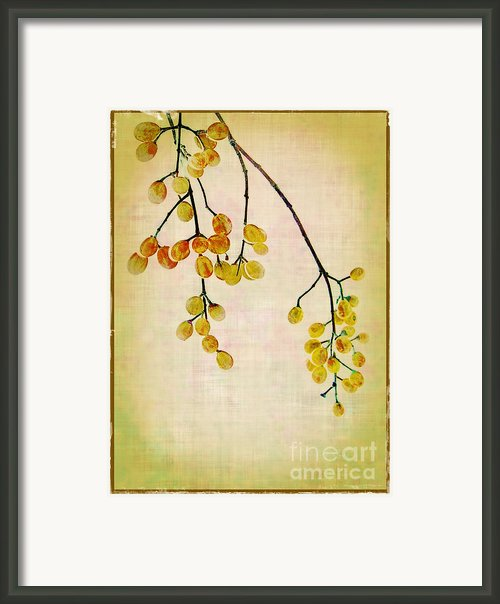 Yellow Berries Framed Print By Judi Bagwell