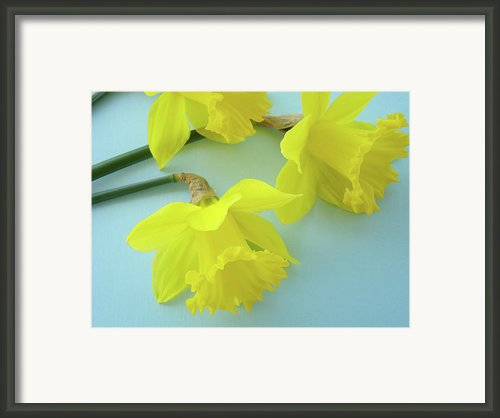 Yellow Daffodils Artwork Spring Flowers Art Prints Nature Floral Art Framed Print By Baslee Troutman Art Prints Giclee