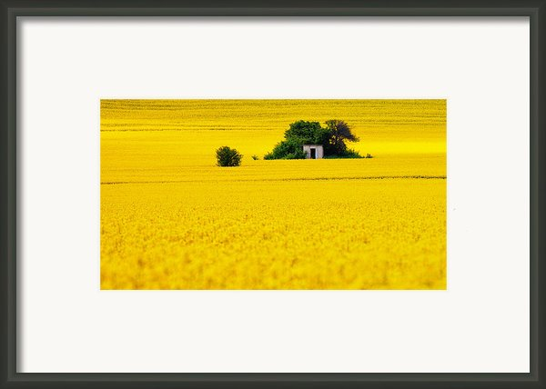 Yellow Framed Print By Evgeni Dinev
