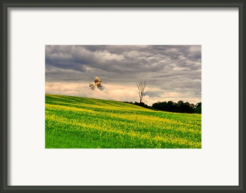 Yellow Hawk Framed Print By Emily Stauring