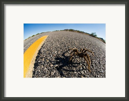 Yellow Line Spider Framed Print By Wayne Stadler