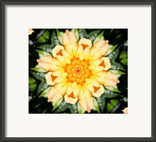 Yellow Rose Kaleidoscope  Framed Print By Cathie Tyler