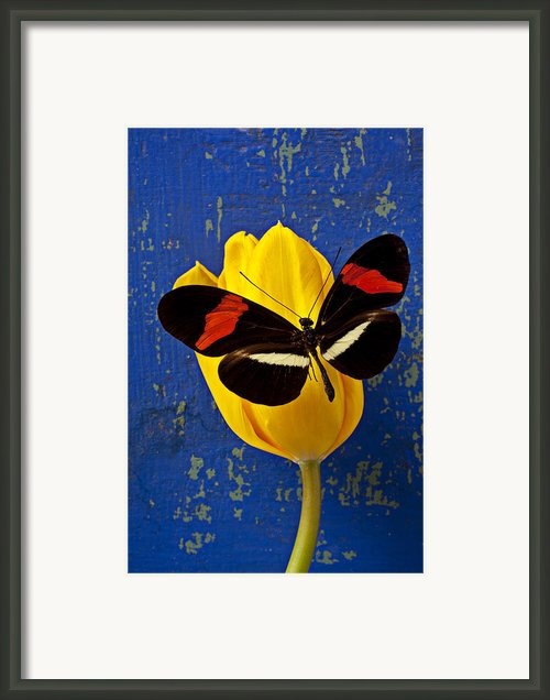 Yellow Tulip With Orange And Black Butterfly Framed Print By Garry Gay