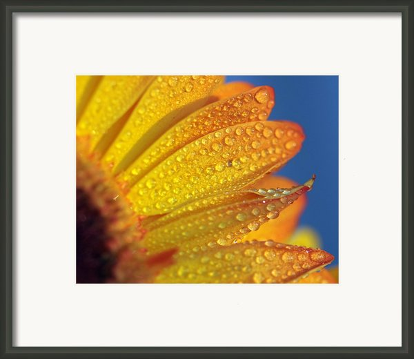 Yellow Wild Flower Framed Print By The*glint