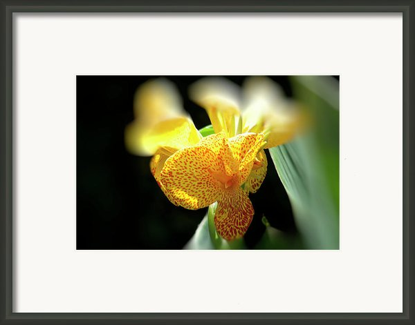Yellow With Red Spots Framed Print By Douglas Barnard