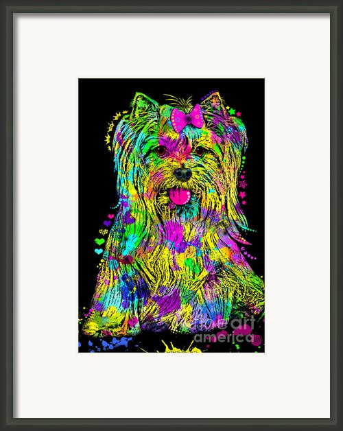Yorkie Beauty Framed Print By Zaira Dzhaubaeva