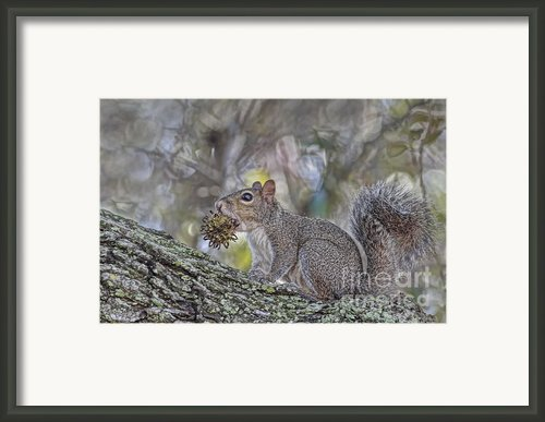 You Caught Me Framed Print By Deborah Benoit