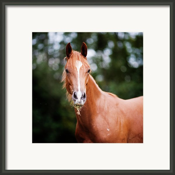 Young Brown Quarter Horse Framed Print By Jorja M. Vornheder