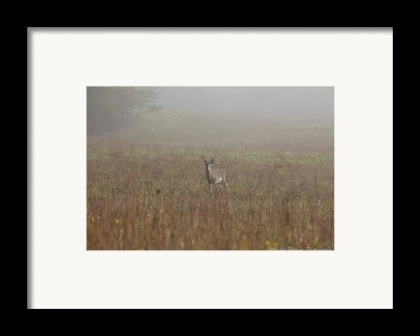 Young Buck Framed Print By Charles Warren