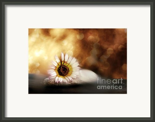 Zen Framed Print By Viaina