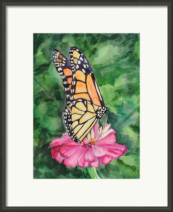 Zinnia And Monarch Framed Print By Judy Loper