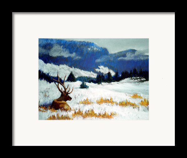 High Country Elk Framed Print By Curt Peifley