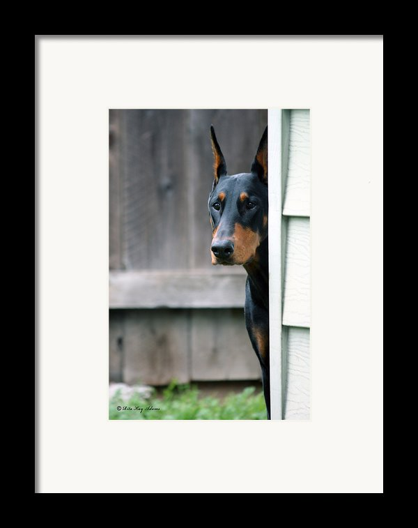 Attentive Framed Print By Rita Kay Adams