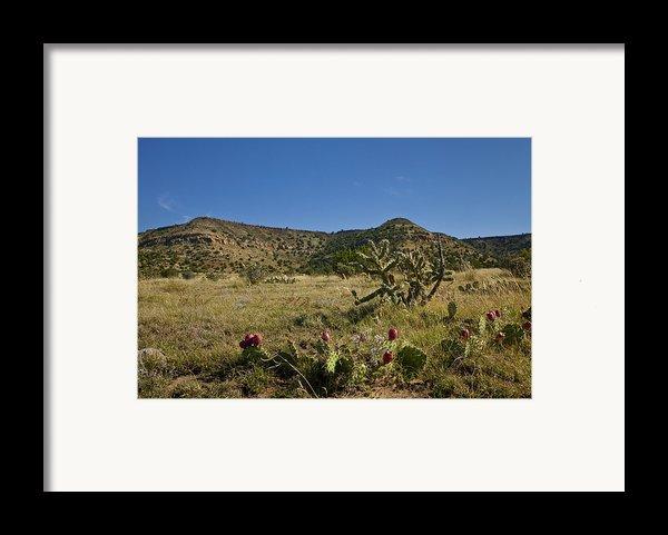 Black Mesa Cacti Framed Print By Charles Warren