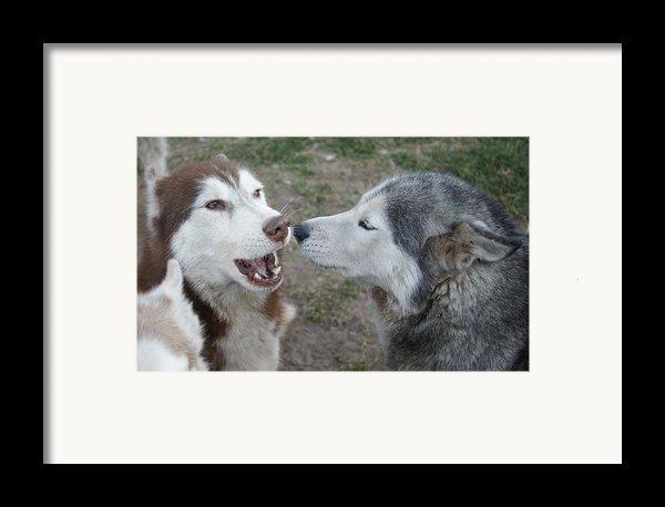 Dog Breath Framed Print By Lynda Dawson-youngclaus