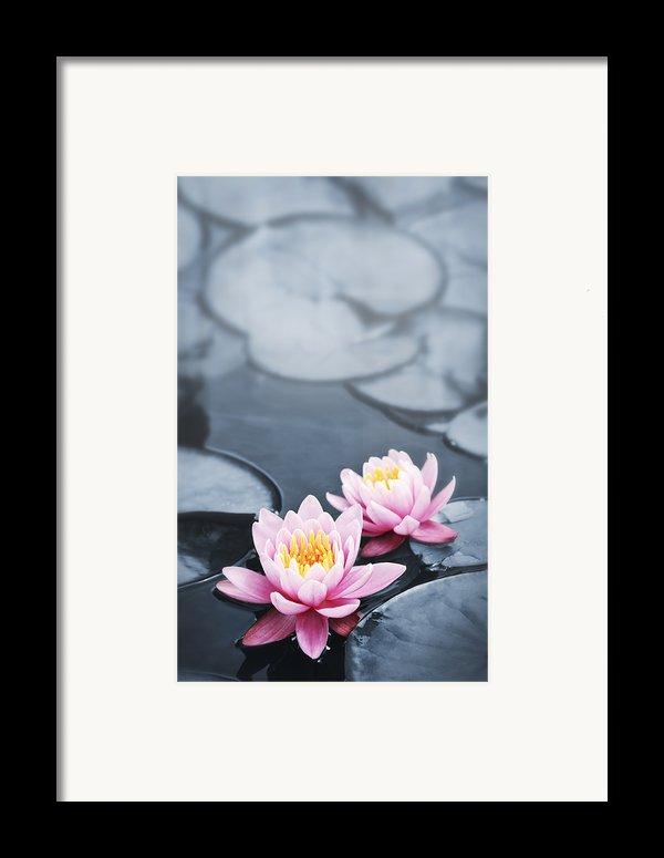 Lotus Blossoms Framed Print By Elena Elisseeva
