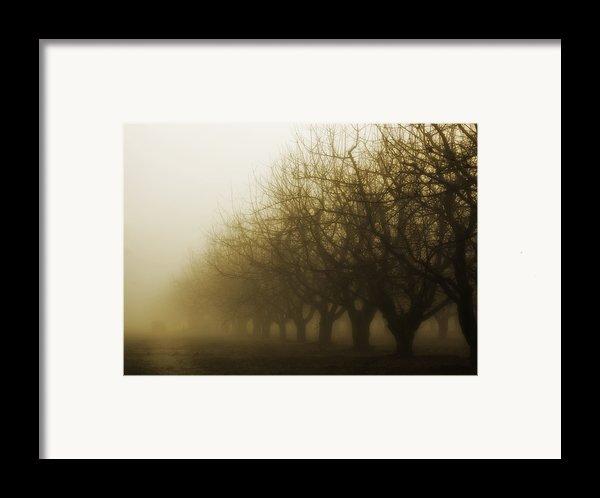 Orchard In Fog Framed Print By Rebecca Cozart
