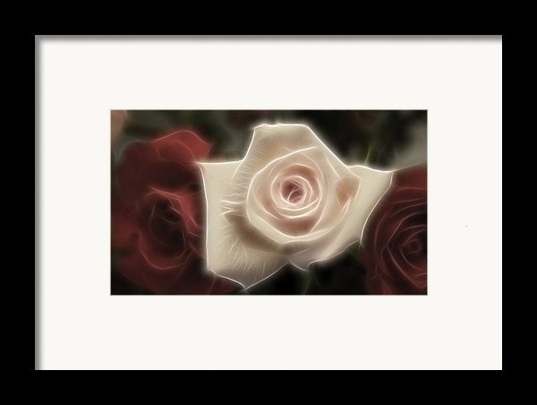 3 Little Roses For Patrice Framed Print By Kevin  Sherf