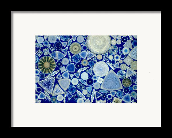 Diatoms Framed Print By M. I. Walker