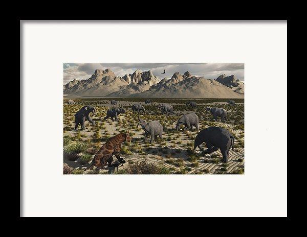 A Sabre-toothed Tiger Stalks A Herd Framed Print By Mark Stevenson