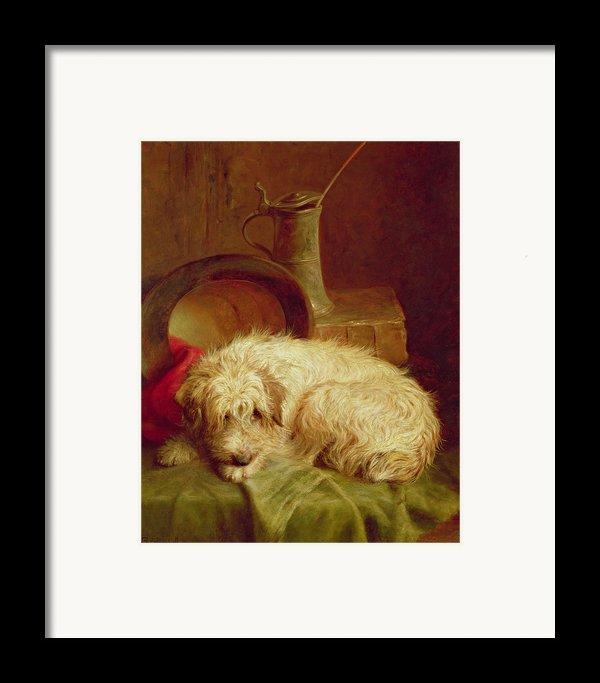A Terrier Framed Print By John Fitz Marshall