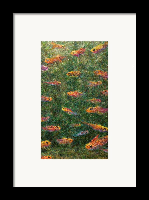 Aquarium Framed Print By James W Johnson