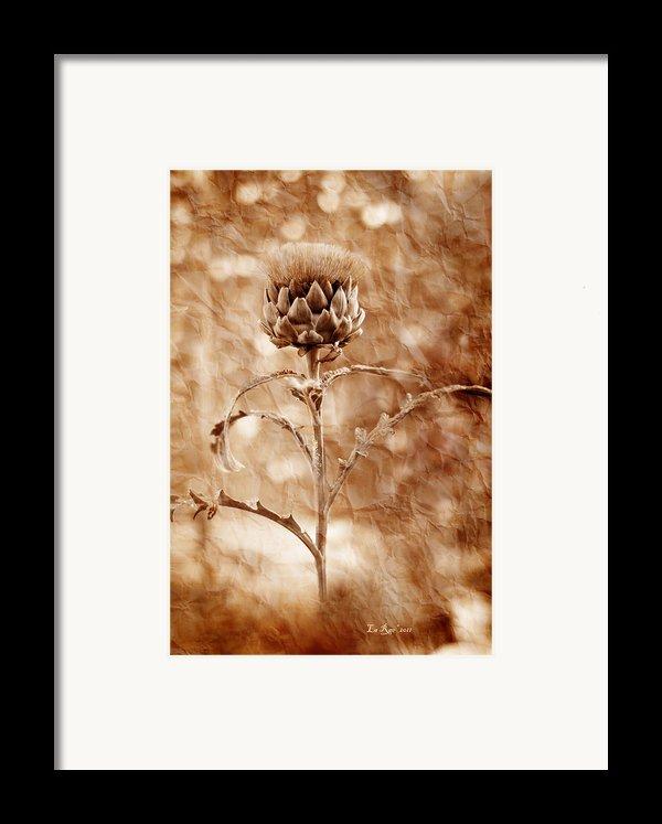 Artichoke Bloom Framed Print By La Rae  Roberts