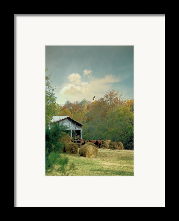 Back At The Barn Again Framed Print By Jan Amiss Photography