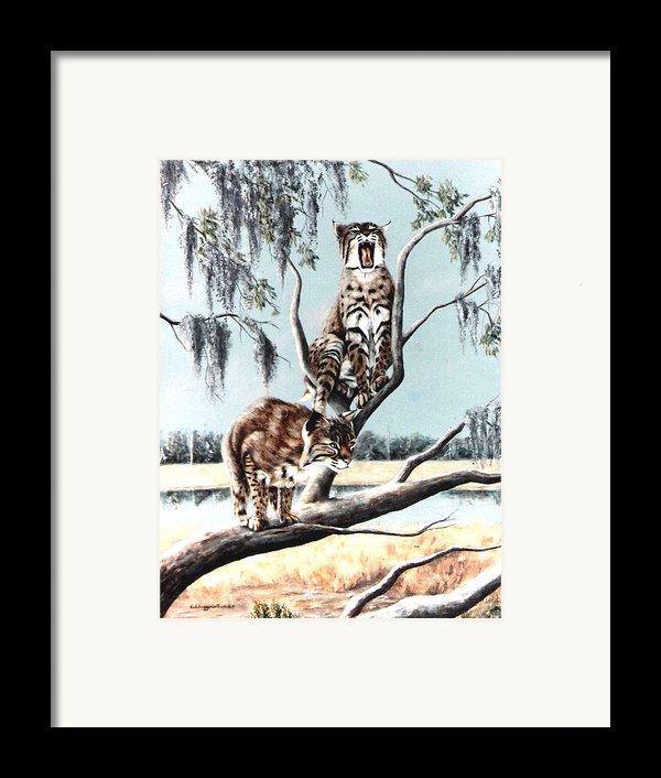 Bayou Bobcats Framed Print By Didi Higginbotham
