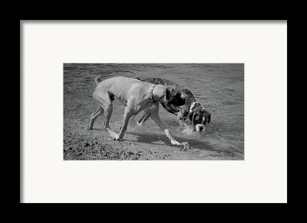 Beach Buddies Framed Print By Digiart Diaries By Vicky B Fuller