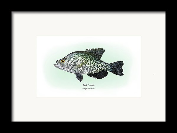 Black Crappie Framed Print By Ralph Martens