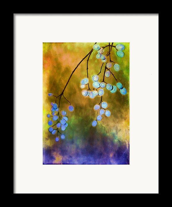 Blue Autumn Berries Framed Print By Judi Bagwell