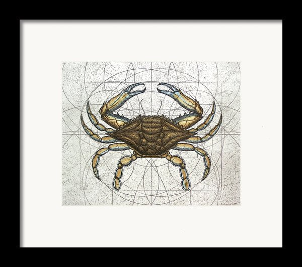 Blue Crab Framed Print By Charles Harden
