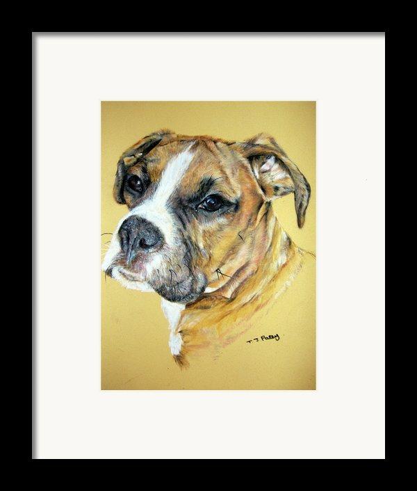 Boxer Framed Print By Tanya Patey
