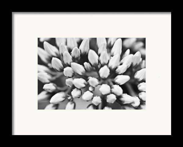Burst Framed Print By Ryan Kelly