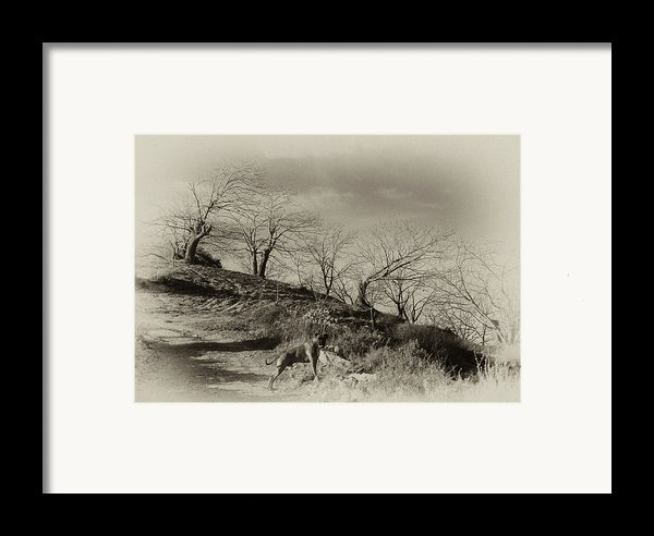 Campo Dog Framed Print By Kenton Smith