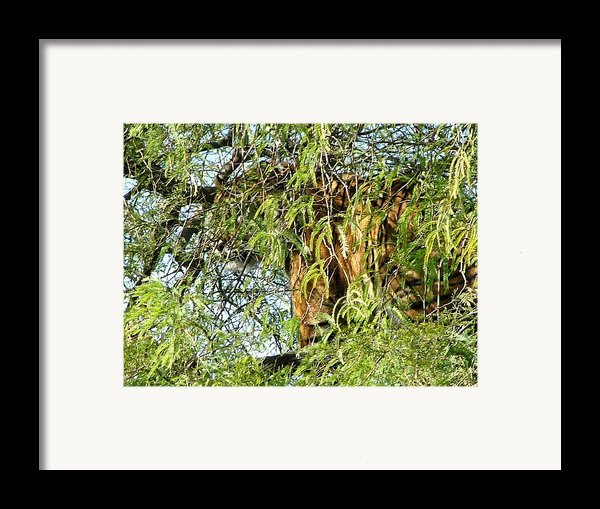 Can You See Me........ Framed Print By Nick Gustafson