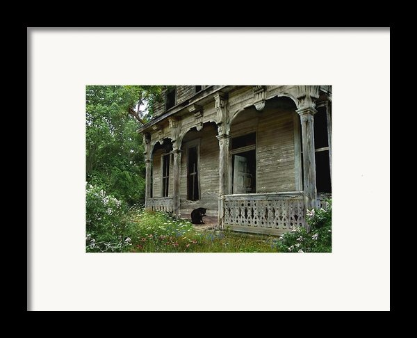 Cat House 2 Framed Print By Tom Straub