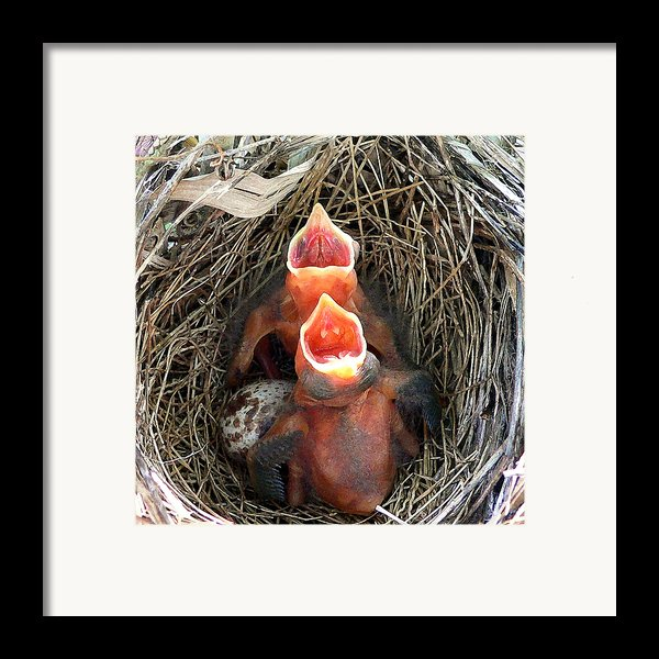 Cavernous Cardinals Framed Print By Al Powell Photography Usa