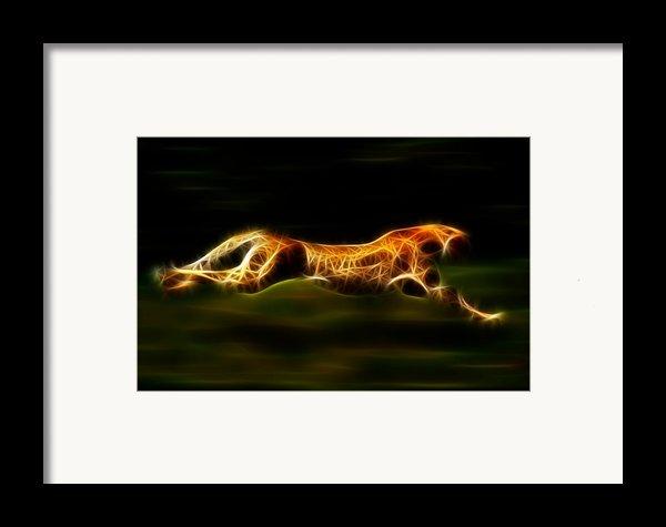 Cheetah Hunting His Prey Framed Print By Pamela Johnson